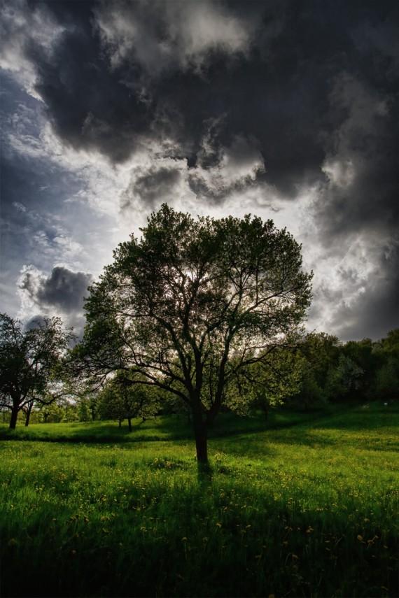 Gewitterbaum