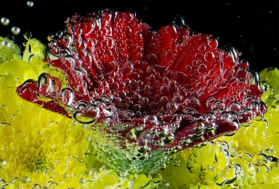 Blume unter Wasser