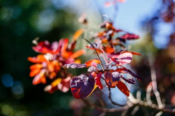 Rote Blätter...