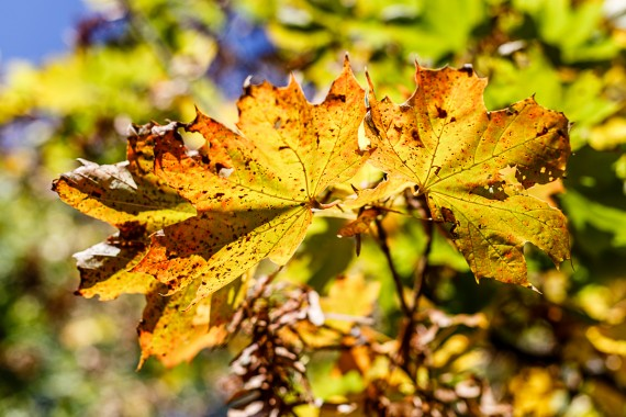 Typisch Herbst!