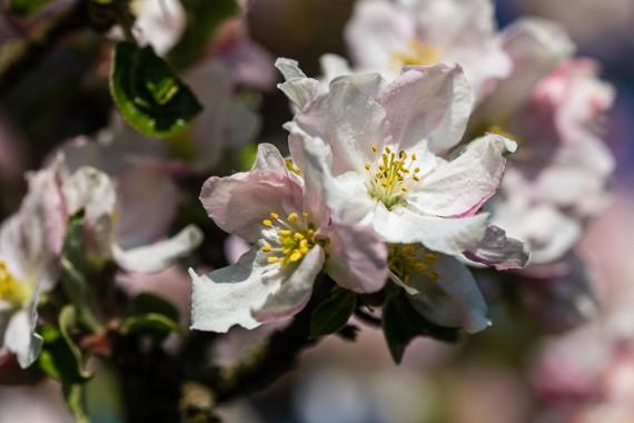Blütenduft