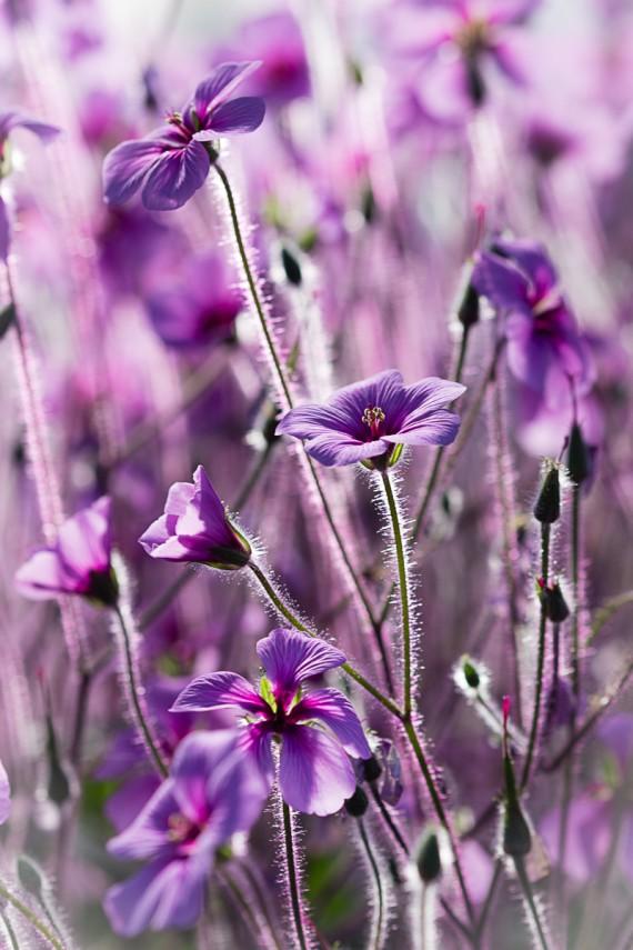 Blüten ohne Ende