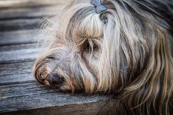 Ich bin sooo müde...