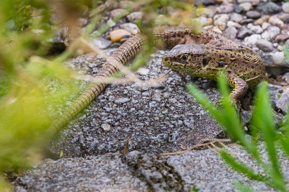 Neugieriges Weibchen