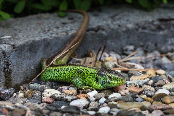 Schönes Grün beim Männchen