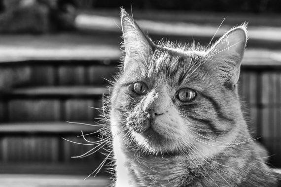 Krasse Katzenaugen
